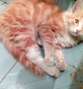 Котята 2-3 месяца