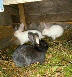 Кролики 2 месячные