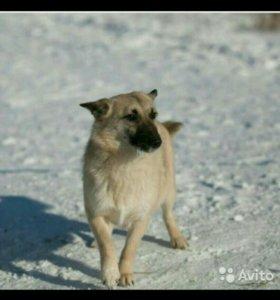 Собака Джесси