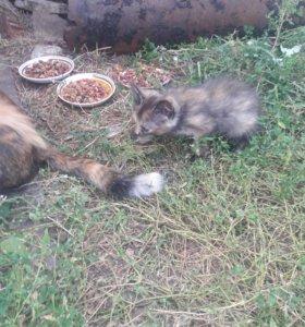 Котята мышеловки