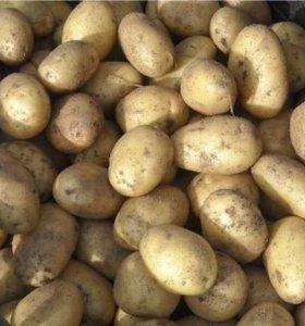 """Отличный картофель сорт""""Невский"""""""