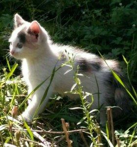 Котёнок (девочка)