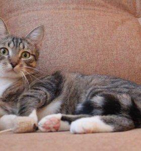 Игривый полосатый кот Фрей, 1 год