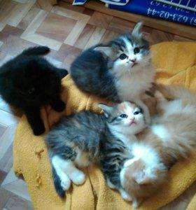 Милых котята