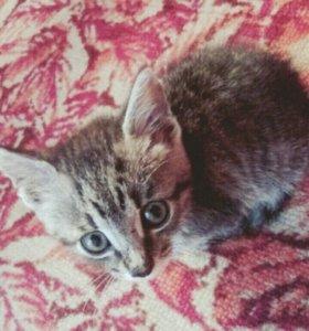 Котенок(1,5 месяца) в добрые руки)