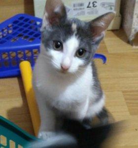 Красноярск коты и кошки