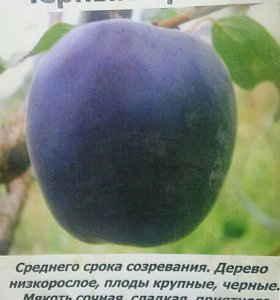 Саженцы сортовых фруктовых деревьев посадка уход з