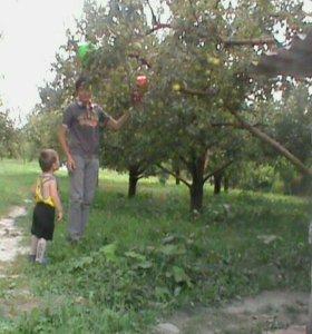 Культурная обрезка сортовых фруктовых деревьев кач