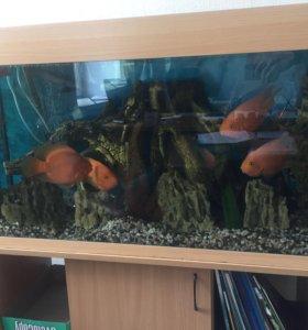Аквариум с 6 рыбками «Клоун»