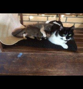 Очаровательные котята ищут дом