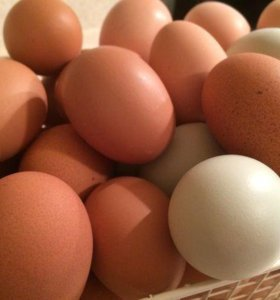 Яйца куриные домашние