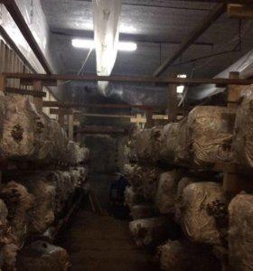 Цех по выращиванию грибов вешенка