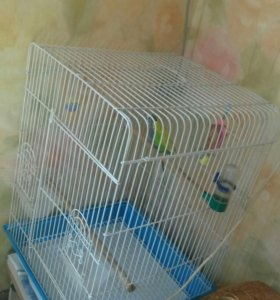 Большая клетка и два попугая волнистых