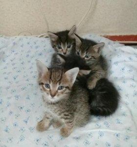 Котята 5 нед. 😻