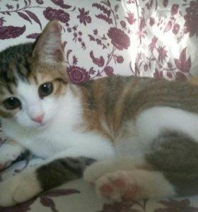 Котята в дар,ТОЛЬКО В РУКИ ВЗРОСЛЫМ С ПАСПОРТОМ!!!
