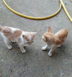 Отдадим котят доставка