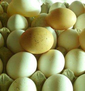 Яйцо( куриное)
