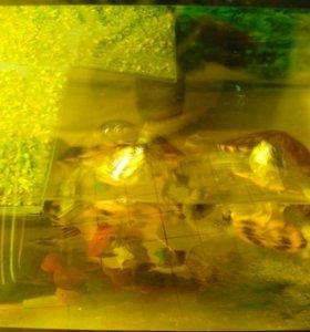 Черепахи+аквариу СРОЧНО