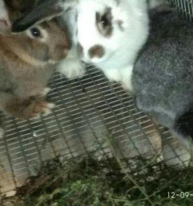 🐰 кролик 🐰