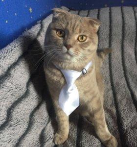 Атласный галстук