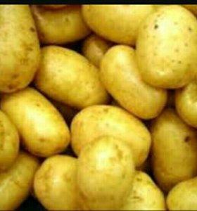 Хороший деревенский желтый картофель. Доставка