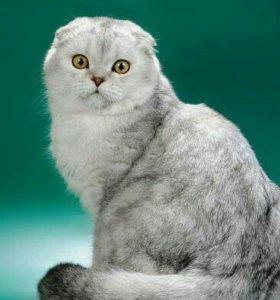 Великолепный кот на вязку