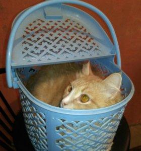 Переноска для котят бу