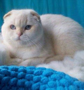 Шикарный кот на вязку