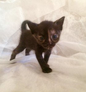 Милые котята в любящие руки 🐱