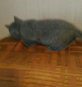 Кошечка 2.5 мес.