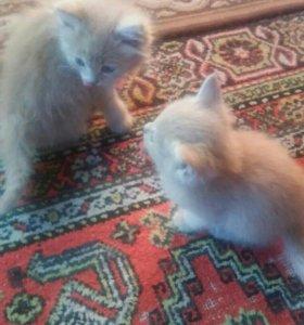 Кошечки даром