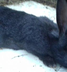 Ассалам Аллейкум срочно продаю кроликов