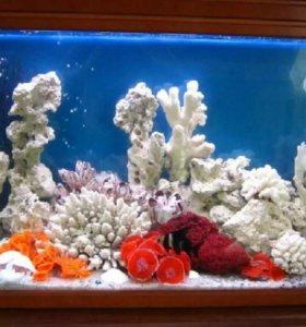 Коралы для пресноводного аквариума.