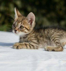 Котенок- ребенок