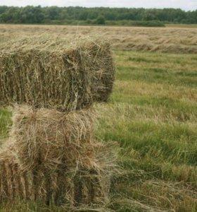 Отличная трава для коров!!!