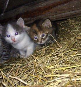 Отдам котят в добрые руки)))