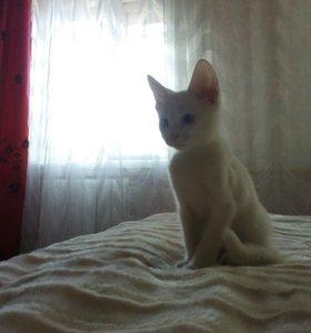 очаровательный котенок