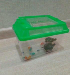 Маленькие красноухие черепахи