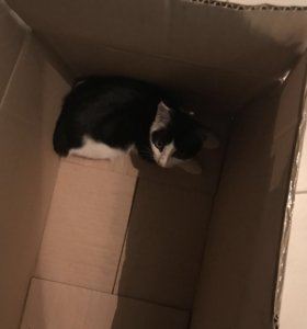 Отдам кошку в хорошие руки кошка ласковая домашняя