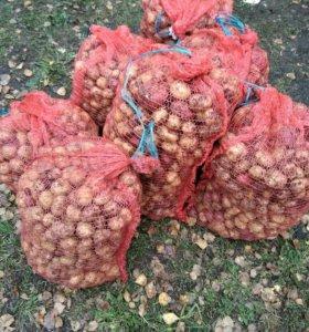Картофель/за сетку