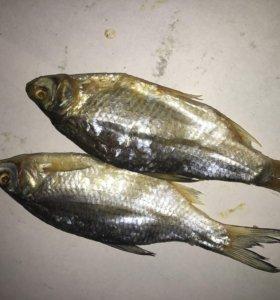 Рыба вял и х/к, закуски к пиву Оптом