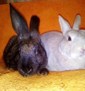 Кролики с клетками