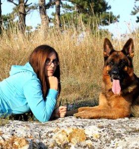 Дрессировка собак любых пород и любого возраста.