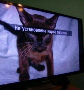 Котята европейской бурмы.