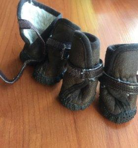 Обувь для тойчика