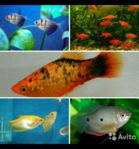 Разнообразие мирных рыбок
