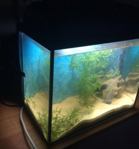 Аквариум 20л с рыбками