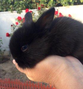 Декоративные крольчата