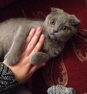 Продам котёнка 4 месяца