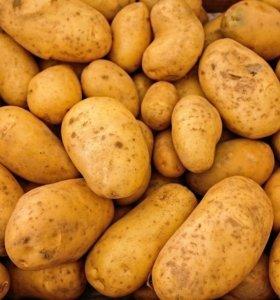 Картофель свежего урожая